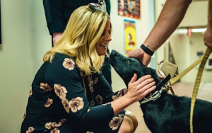 Blaze the Therapy Dog